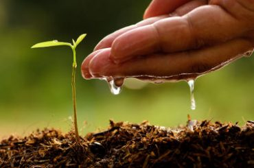 Ficha de Trabalho – Correção e conservação dos solos (3) – Soluções