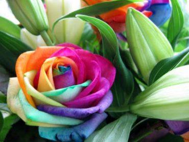 Jogos – Plantas com Flor (3)