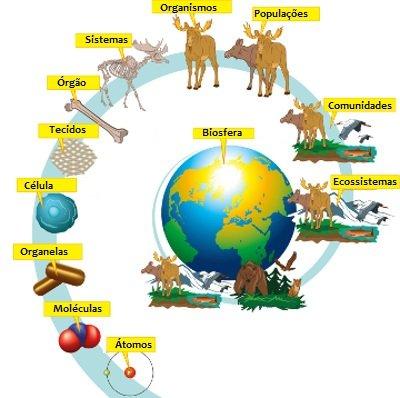 Níveis de organização dos ecossistemas