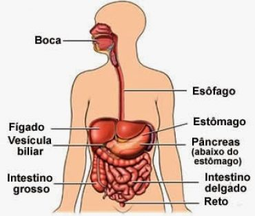 Jogos – Sistema digestivo humano (1)