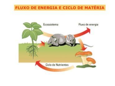 Teste Diagnóstico – Fluxo de energia e ciclo da matéria (5)