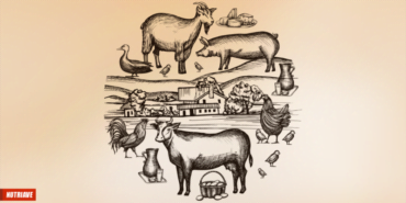 Teste Diagnóstico – A agricultura, a pecuária e a pesca (2)