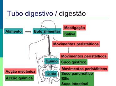 Ficha de Trabalho – Alimentação e digestão (1)