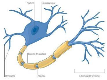Ficha de Trabalho – Sistema Neuro-hormonal (2)