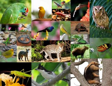 Teste Diagnóstico – Diversidade dos animais (1) – Soluções