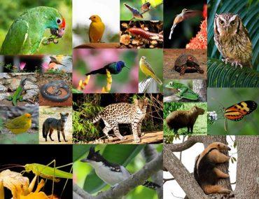 Teste Diagnóstico – Diversidade dos animais (2)